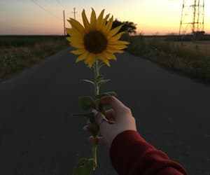 sunflower and sunset image