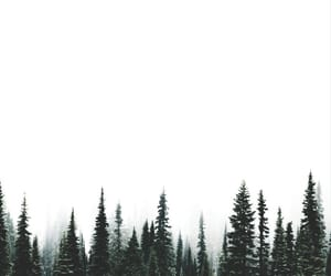 aesthetic, forest, and minimalism image