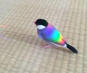 bird, rainbow, and animal image