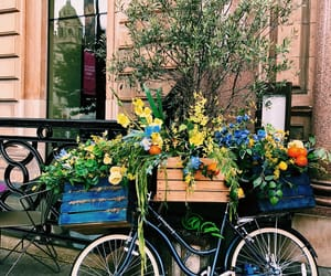 bicicle, city, and flowers image