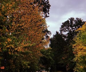 arbres, fall, and tree image