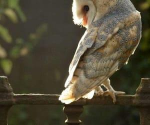 owl, beautiful, and animal image