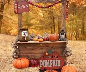 FRUiTS, photography, and pumpkin image