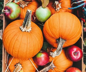 apples, fall, and pumpkin image