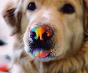 dog, rainbow, and cute image