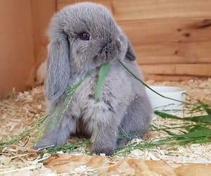 Animales, conejo, and lindo image