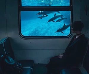 dolphin, blue, and train image