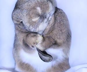 kaninchen hase bunny cute image