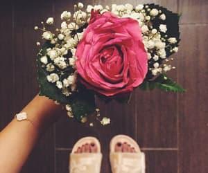pink rose, rose, and 🌹 image