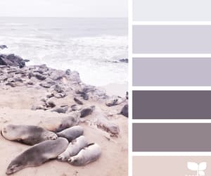 beach, color, and colors image