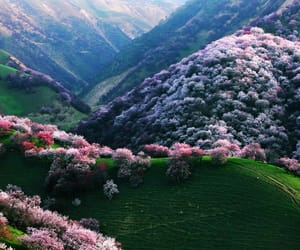 nature, flowers, and pink image
