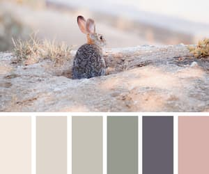 aesthetics, color, and colors image