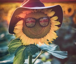 creative, sunflower, and nature image