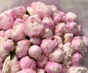 flowers, peonies, and pink flowers image