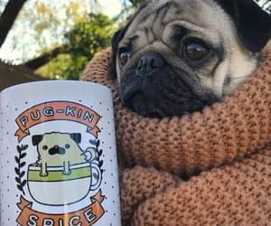 pug, autumn, and coffee image