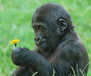 flowers, animal, and monkey image