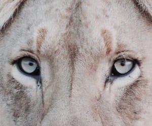 lion, theme, and animal image