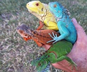 animals, grass, and hand image