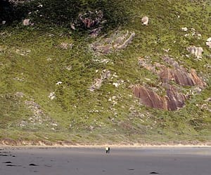 australia, beach, and norman image