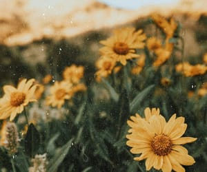 flowers, yellow, and green image