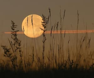 autumn, fall, and harvest moon image