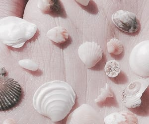 aesthetic, shell, and theme image