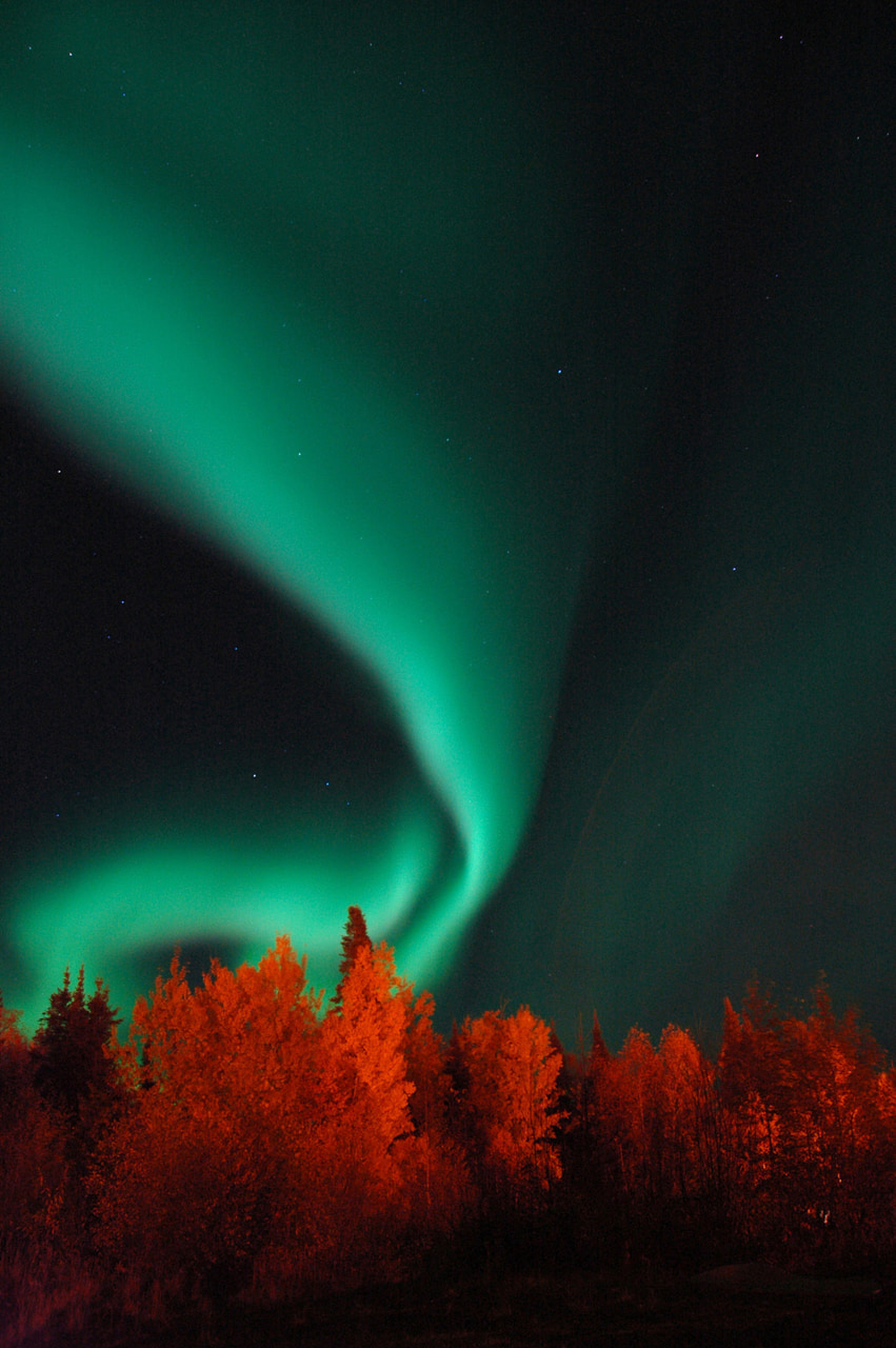 aurora borealis, forest, and nature photography image