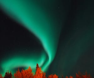 aurora borealis, autumn colors, and forest image