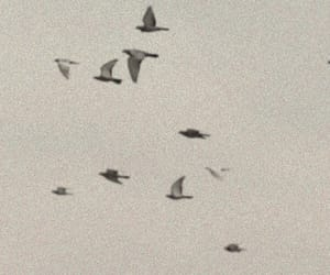 birds, header, and twitter image