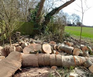 stump grinding, hedge cutting, and tree reduction image