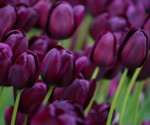 تفسير حلم اللون البنفسجي رؤية لون بنفسجي في منام