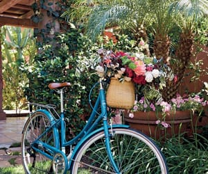 bike, flowers, and garden image