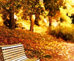autumn, autumn colors, and bench image
