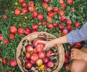 apple, autumn, and fall image