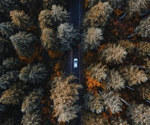 trees, autumn, and car image