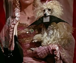 batman, pinks, and poodle image