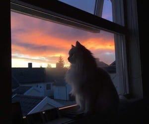 cat, animal, and sunset image