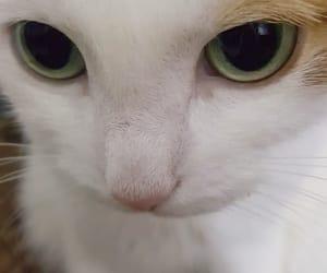 animal, green, and sweet image