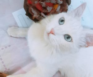 albinos, cat, and cotton image