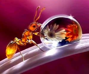 animal, animals, and ant image