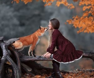 animals, autumn, and fall image
