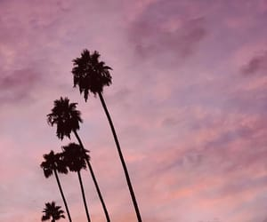 gold, palmtrees, and pink image