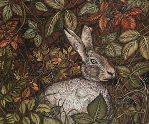 botany, hare, and illustration image