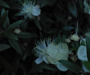 calm, dawn, and flower image
