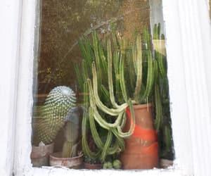 cactus, green, and kaktus image