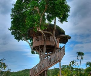 background and treehouse image
