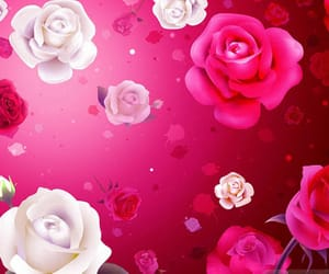 rose and background wallpapers image