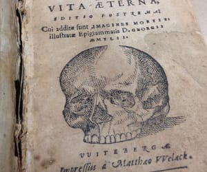Halloween, skull, and specialcollections image
