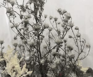 aesthetic, flower, and withered flower image