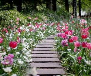 flowers, tulip, and colorful image